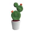 cactus-y-crasas