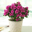 planta-interior-flor