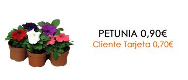 Petunia 0,9 0,70