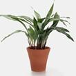 plantas-de-sombra