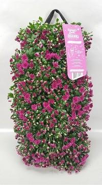 Planta De Exterior - Planta De Temporada - Bolsa Colgante Con Crisantemo 50cm