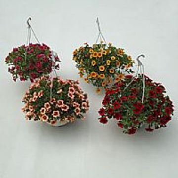 Planta De Exterior - Planta De Temporada - Calibrachoa Tarrina 15cm Colores Variados