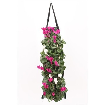 Planta De Exterior - Planta De Temporada - Bolsa Colgante Cyclamen 50cm