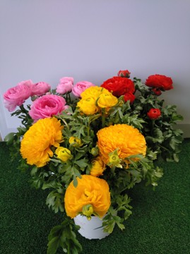 Planta De Exterior - Planta De Temporada - Ranunculo Maceta 12cm