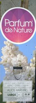 Planta De Exterior - Arbustos  Caducos - Lilo Alice Harding Blanco C10l