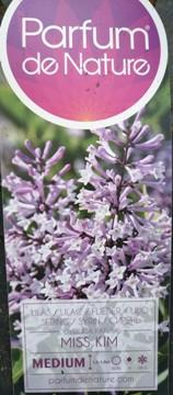 Planta De Exterior - Arbustos  Caducos - Lilo Miss Kim Lila C10l