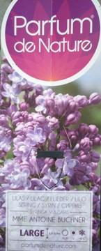 Planta De Exterior - Arbustos  Caducos - Lilo Mme Antoine Buchner Lila C10l