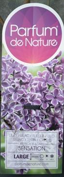 Planta De Exterior - Todas - Lilo Sensation Lila C5l