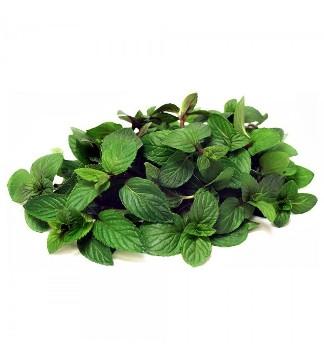 Planta De Exterior - Aromaticas - Menta Chocolate Maceta 10,5cm