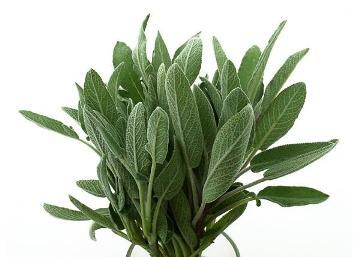 Planta De Exterior - Plantas Aromaticas Ecologicas - Salvia Ecologica Maceta 11cm