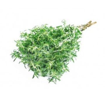Planta De Exterior - Plantas Aromaticas Ecologicas - Tomillo Ecologico Maceta 11cm