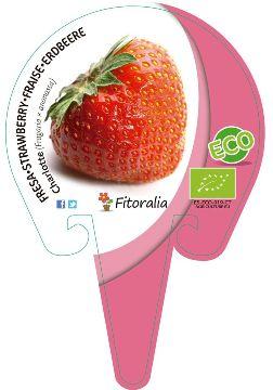 Planta De Exterior - Plantas De Huerto Ecologicas - Fresa Charlotte Ecologica Maceta 10,5cm