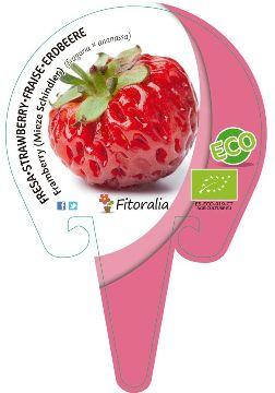 Planta De Exterior - Plantas De Huerto Ecologicas - Fresa Framberry Ecologica Maceta 10,5cm