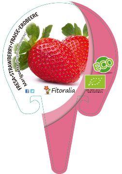 Planta De Exterior - Plantas De Huerto Ecologicas - Fresa Mariguette Ecologica Maceta 10,5cm