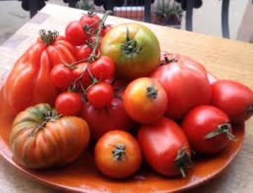 Planta De Exterior - Plantas De Huerto Ecologicas - Tomates Ecologicos Bandeja 12uds