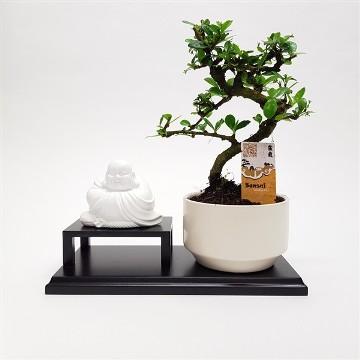 Planta De Interior - Planta Interior Hoja - Bonsai + Buda Ceramica Maceta 26cm