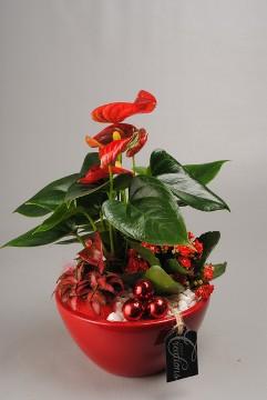 Planta De Interior - Planta Interior Flor - Centro De Plantas
