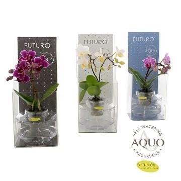 Planta De Interior - Planta Interior Flor - Orquidea Mini 1 Vara Con Recipiente Autoriego