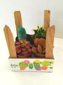 Planta De Interior - Cactus Y Crasas - CAJA 4UDS CACTUS COLORES