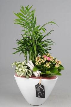 Planta De Interior - Planta Interior Hoja - Composicion Plantas 18cm