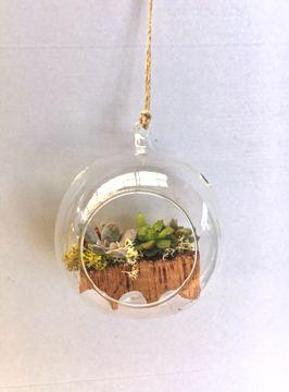 Planta De Interior - Jardines Verticales - COMPOSICION BOLA CRISTAL