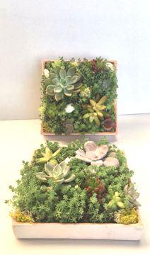 Planta De Interior - Jardines Verticales - COMPOSICION CUADRO CERAMICA