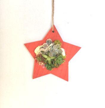 Planta De Interior - Jardines Verticales - Composicion Estrella 15cm