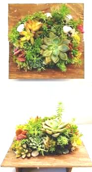 Planta De Interior - Jardines Verticales - COMPOSICION JAPONESA MEDIANA