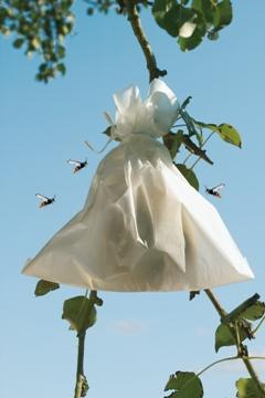 Complementos Jardinería               - Cubiertas Y Protecciones - Bolsa Proteccion Fruta 20x30cm 50uds