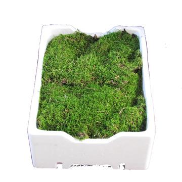 Planta De Exterior - Planta De Temporada - Musgo En Caja 2.5kg Aprox.