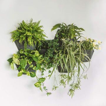 Jardines Verticales - Todas - Jardin Vertical Espora